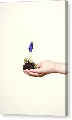 Purple Flower Canvas Print by Joana Kruse