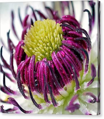 Purple Flower Canvas Print by Toppart Sweden