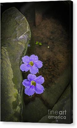 Purple Flowers Canvas Print by Patricia Hofmeester