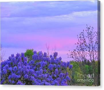 Purple Haze Canvas Print by David Lankton