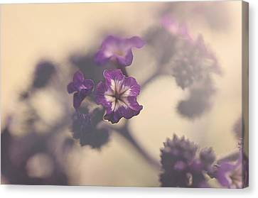 Purple Haze Canvas Print by Faith Simbeck