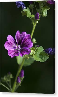 Purple Hollyhock Flowers Canvas Print by Christina Rollo