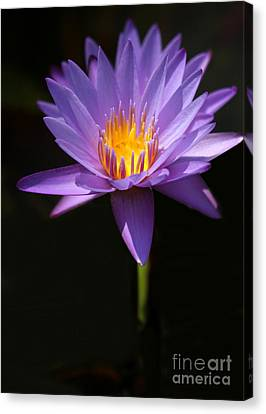 Purple Petals Canvas Print by Sabrina L Ryan