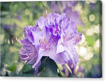 Purple Rhododendron Sparkles Canvas Print by Priya Ghose