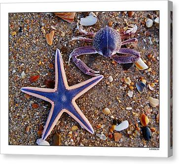 Purple Starfish And Crab Canvas Print by Mark Lemmon