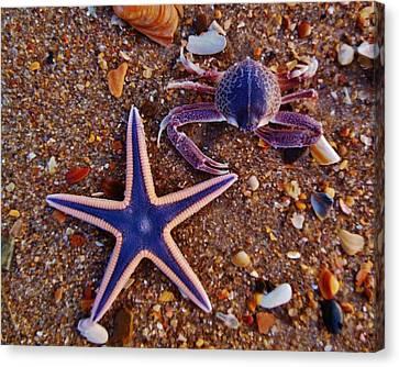 Purple Starfish And Purple Crab 8 3/16 Canvas Print by Mark Lemmon