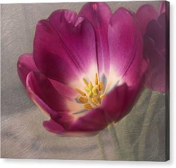 Purple Tulip Canvas Print by Kim Hojnacki