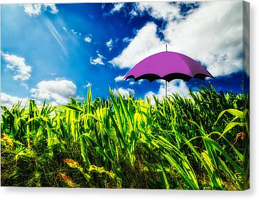 Purple Umbrella In A Field Of Corn Canvas Print by Bob Orsillo