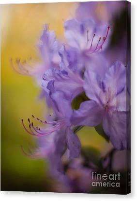Purple Whispers Canvas Print by Mike Reid
