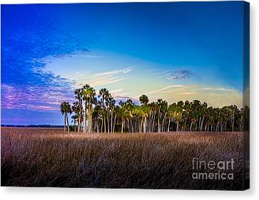 Quailty Time Canvas Print by Marvin Spates