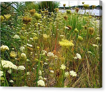 Queen Anne's  Lace Riverfront  Canvas Print by Rick Todaro