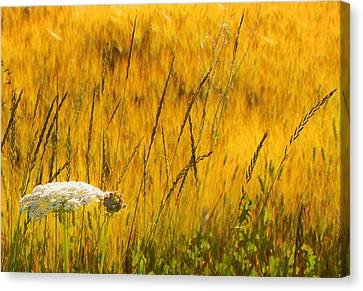 Queen Anne's Lace Canvas Print by Theresa Tahara