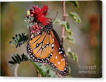 Queen Butterfly Canvas Print by Mariola Bitner