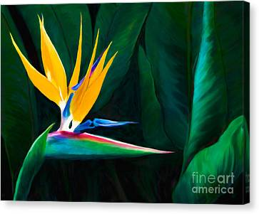 Painted Queen Of The Garden Bird Of Paradise Flower Canvas Print by Sherry  Curry