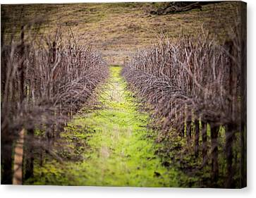Quiet Vineyard Canvas Print by Mike Lee