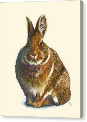 Rabbit Canvas Print by Catherine Noel