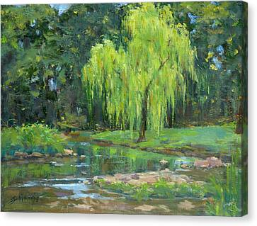 Radiant Willow Canvas Print by Sandra Harris