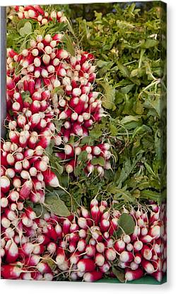 Radishes Canvas Print by Art Ferrier