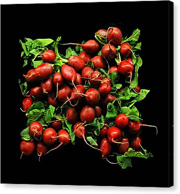 Radishes  Canvas Print by Diana Angstadt