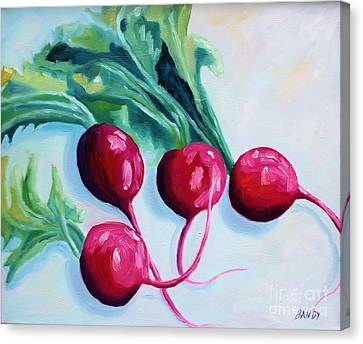 Radishes Canvas Print by Todd Bandy