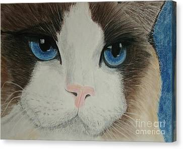 Blue Eyes Canvas Print by Cybele Chaves