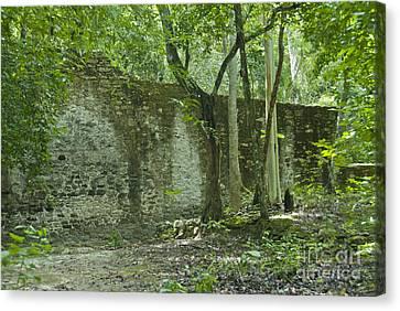 Rain Forest Jungle And Ruins At Calakmul Canvas Print by Ellen Thane