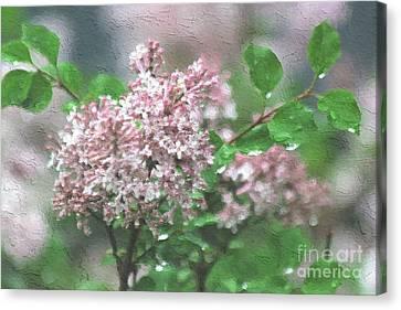 Rain-kissed Lilac Canvas Print by Robin Konarz