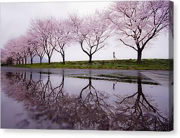 Rain Of Spring Canvas Print by Kouji Tomihisa
