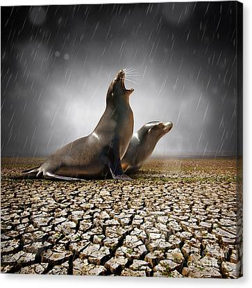 Rain Relief Canvas Print by Carlos Caetano