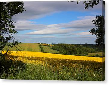 Rainbow Fields Canvas Print by Theresa Selley
