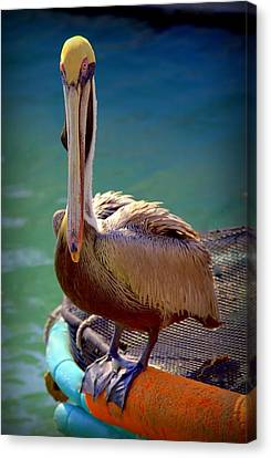 Rainbow Pelican Canvas Print by Karen Wiles