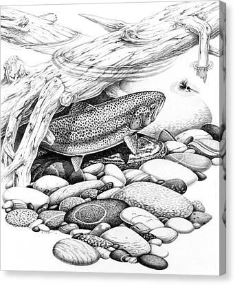 Rainbow Trout Pencil Study Canvas Print by Jon Q Wright