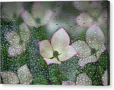 Raindrops On Glass With A View Of Pink Canvas Print by Debra Brash