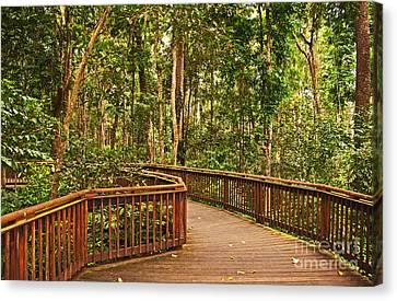 Rainforest Walkway Canvas Print by Bob and Nancy Kendrick