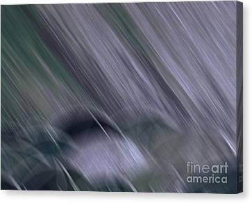 Rainy By Jrr Canvas Print by First Star Art