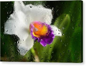 Rainy Day Orchid - Botanical Art By Sharon Cummings Canvas Print by Sharon Cummings