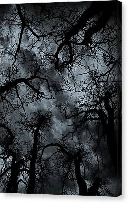 Random Thoughts - Nature Abstract Canvas Print by Steven Milner