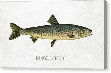 Rangeley Trout Canvas Print by Aged Pixel