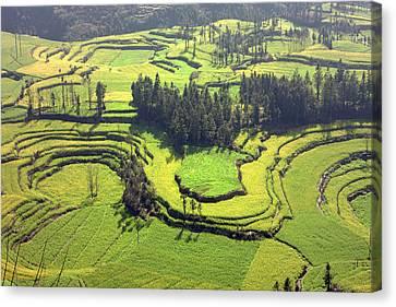 Rapeseed Field Canvas Print by King Wu