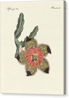 Rare African Plants Canvas Print by Splendid Art Prints