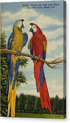 Rare Bird Or Parrot Farm Miami Florida Vintage Postcard Canvas Print by Kathy Hunt