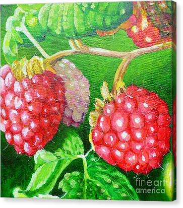 Raspberry Ripening Canvas Print by Lorraine Fenlon