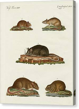 Rats And Mice Canvas Print by Splendid Art Prints