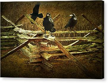 Raven Crows On A Split Rail Fence Canvas Print by Randall Nyhof