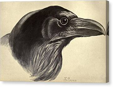 Raven Canvas Print by Philip Ralley