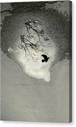 Raven Reflection Canvas Print by Cambion Art