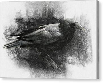 Raven Canvas Print by Taylan Apukovska