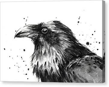 Raven Watercolor Portrait Canvas Print by Olga Shvartsur