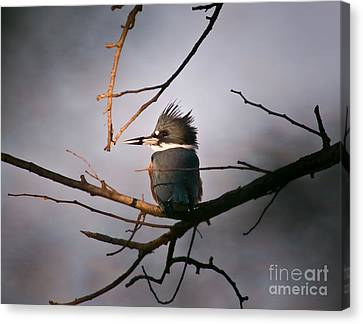 Ray Of Light On Kingfisher Canvas Print by Robert Frederick