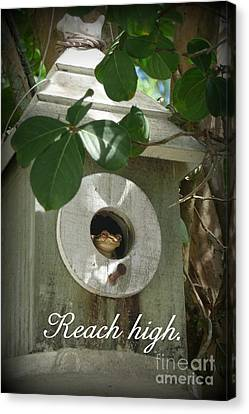 Reach High Canvas Print by Valerie Reeves